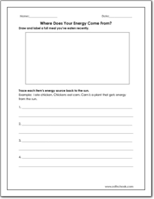 Ecosystems worksheets 4th grade